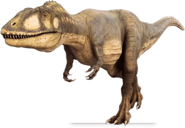Carcharodontosaurus Saharicus   Dinochecker Dinosaur Gallery