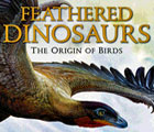 Feathered dinosaurs from around the world
